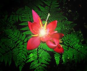 цветок папоротника