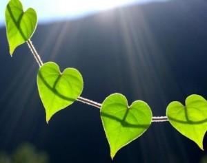 priroda i serdce