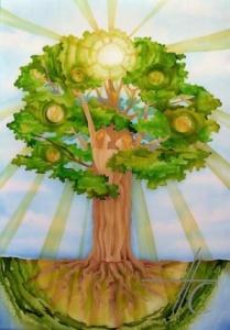 Drevo Roda
