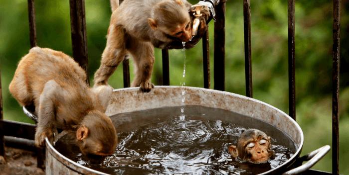 Чему учит жизнь в теле животного