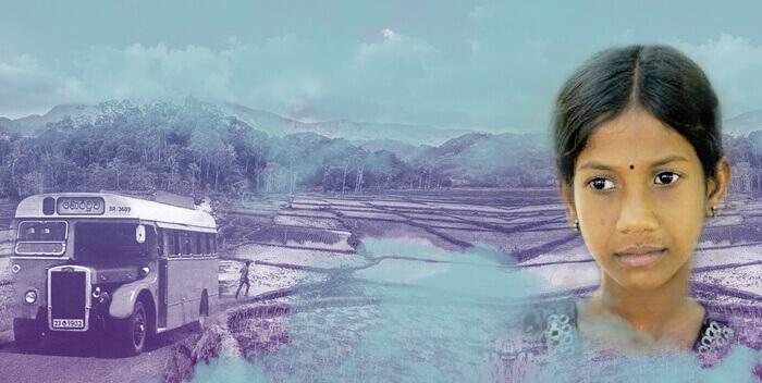 трагедия на рисовом поле