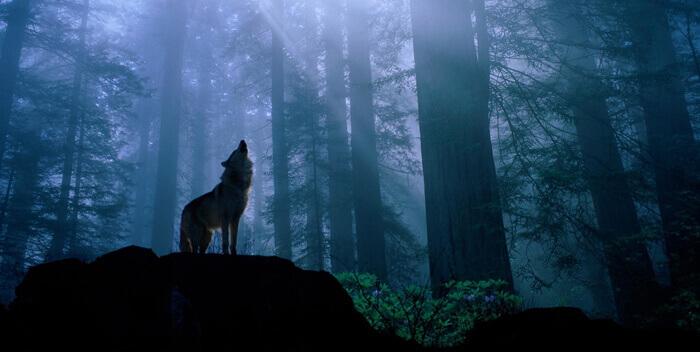 Девочка и волк: встреча со своей душой