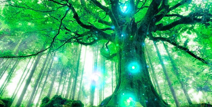 Процесс реинкарнации: основные уроки из прошлых жизней